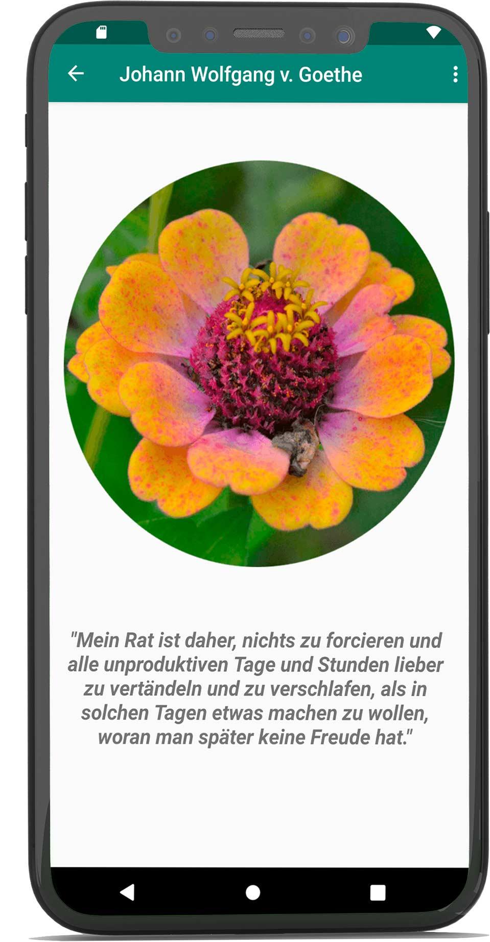 Handy_Mockup3_Mitte